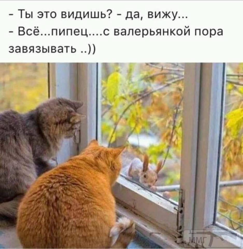 43798 - Пить или не пить? - пятничная алкогольная тема )))