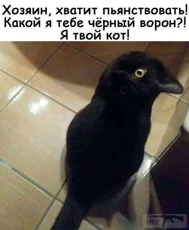 44073 - Пить или не пить? - пятничная алкогольная тема )))