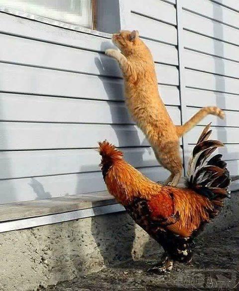 44297 - Смешные видео и фото с животными.