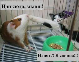 45013 - Смешные видео и фото с животными.