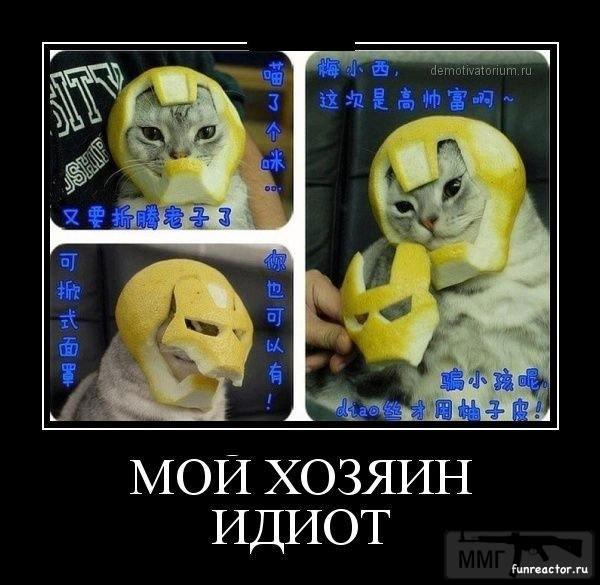 45092 - Смешные видео и фото с животными.