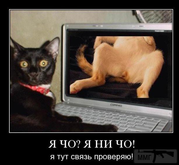 45235 - Смешные видео и фото с животными.