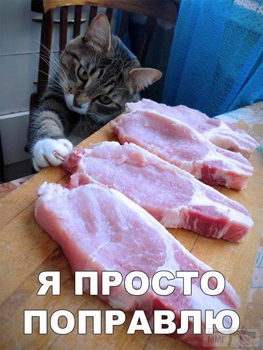 45299 - Смешные видео и фото с животными.