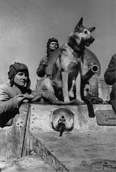 45493 - Животные на войне