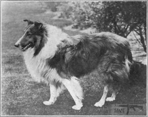 45494 - Животные на войне