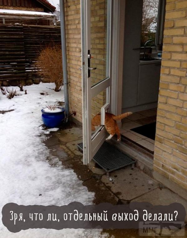 45584 - Смешные видео и фото с животными.