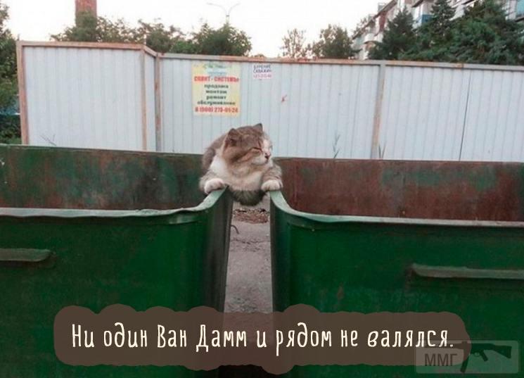 45585 - Смешные видео и фото с животными.
