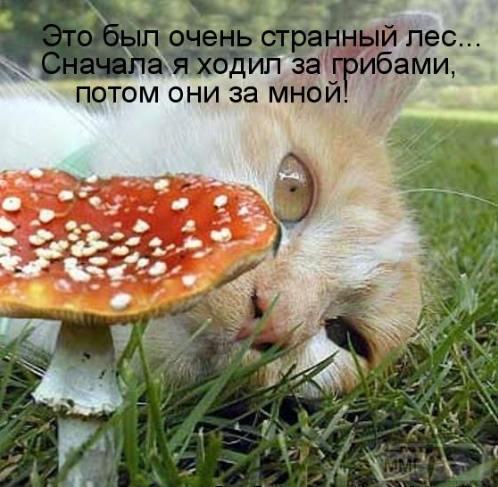 45945 - Пить или не пить? - пятничная алкогольная тема )))