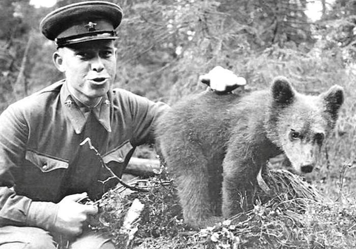 50750 - Животные на войне