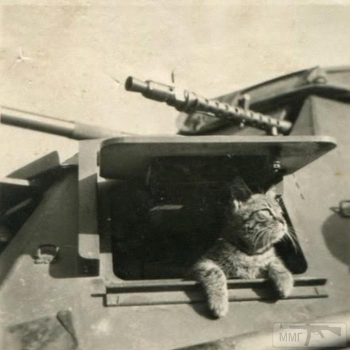 50753 - Животные на войне