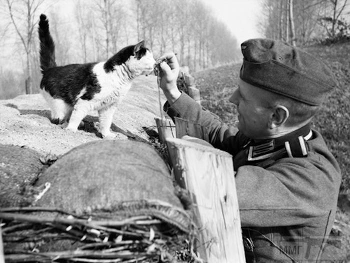 50754 - Животные на войне