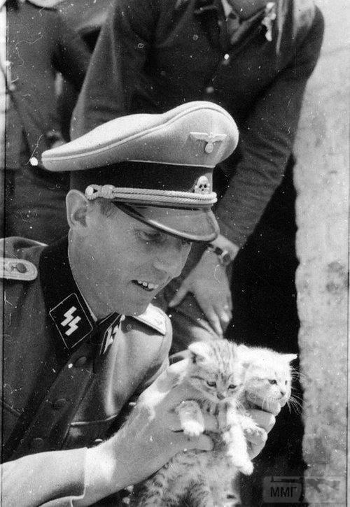 51623 - Животные на войне