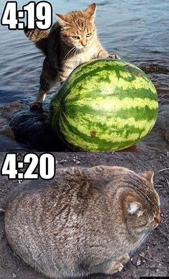 51641 - Смешные видео и фото с животными.