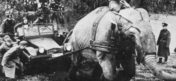 52083 - Животные на войне