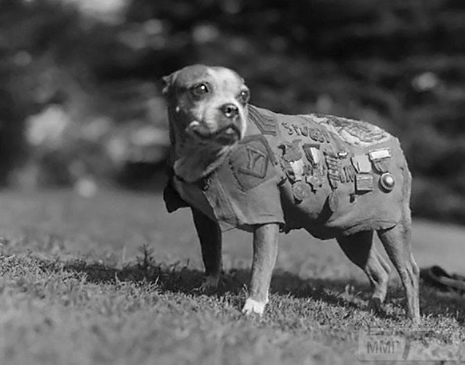 52085 - Животные на войне