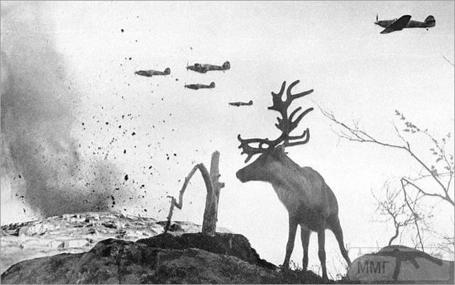 52098 - Животные на войне