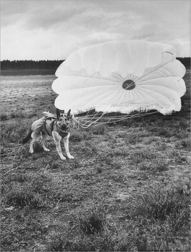 52101 - Животные на войне