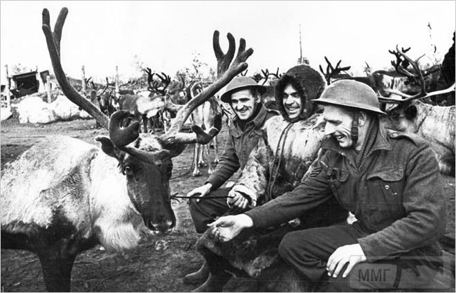 52103 - Животные на войне
