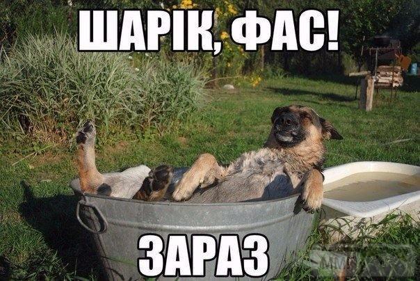52119 - Смешные видео и фото с животными.