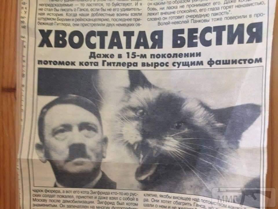 54181 - А в России чудеса!