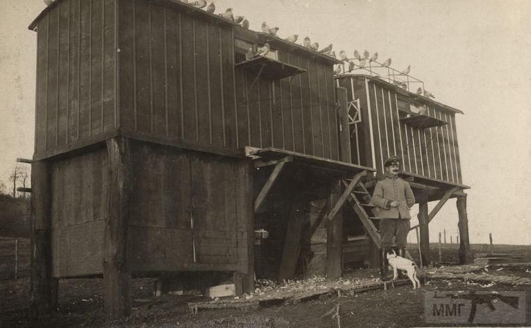 54659 - Военное фото. Западный фронт. 1914-1918г.г.