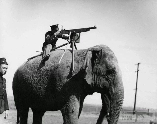 55428 - Животные на войне