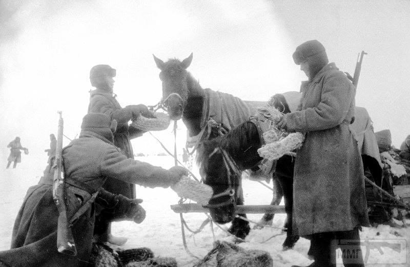 55703 - Военное фото 1941-1945 г.г. Восточный фронт.