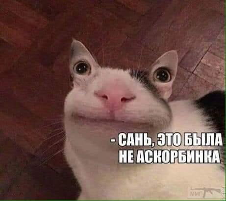 62878 - Смешные видео и фото с животными.