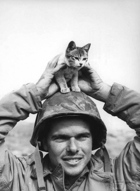 64353 - Животные на войне