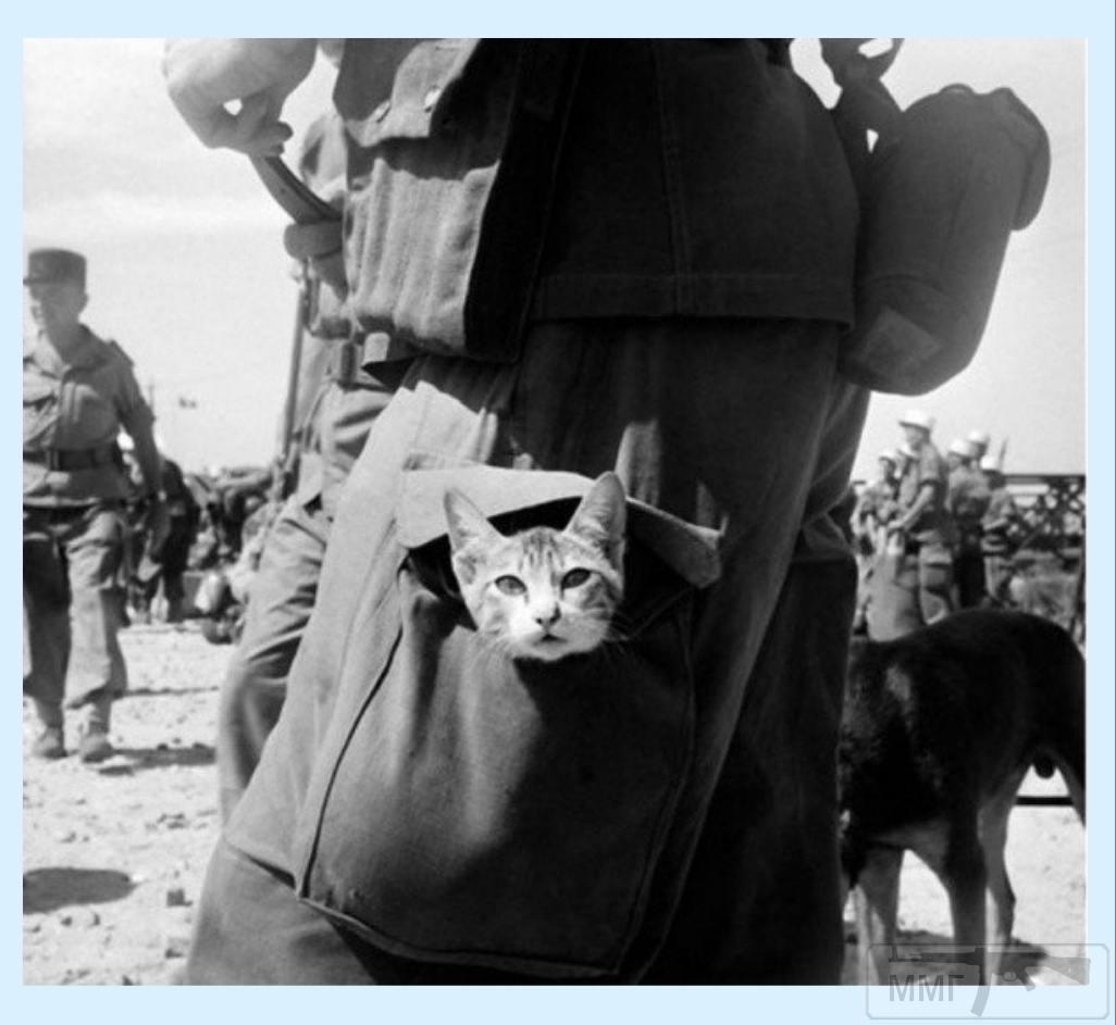 64364 - Животные на войне