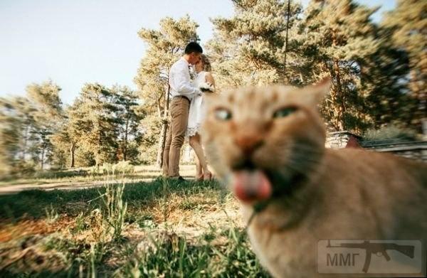 65841 - Смешные видео и фото с животными.