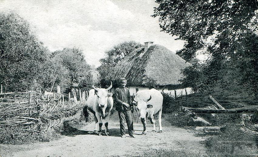 66993 - Мальовнича Україна.