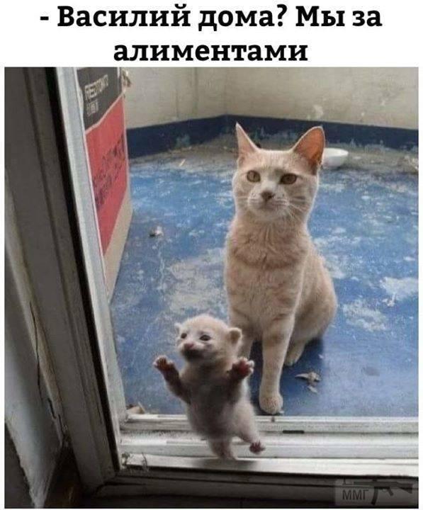 71161 - Смешные видео и фото с животными.