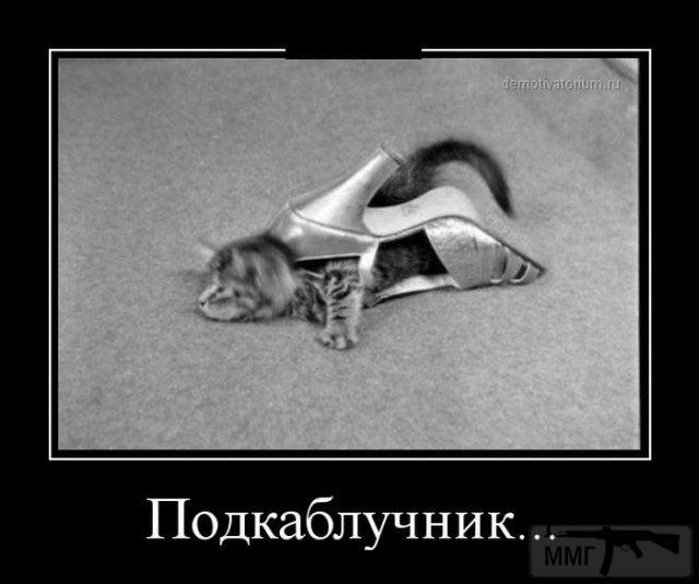 71593 - Смешные видео и фото с животными.