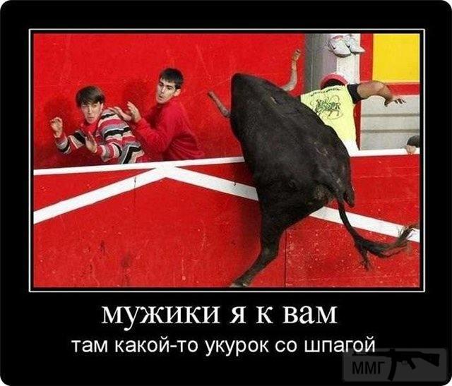71594 - Смешные видео и фото с животными.