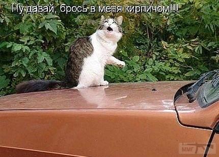 71596 - Смешные видео и фото с животными.