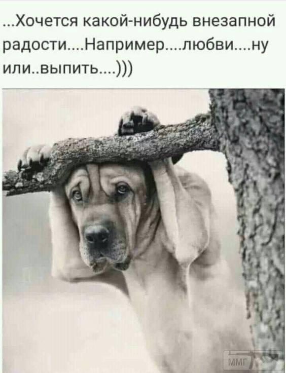 71950 - Пить или не пить? - пятничная алкогольная тема )))