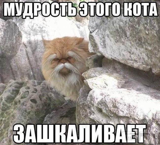 72174 - Смешные видео и фото с животными.