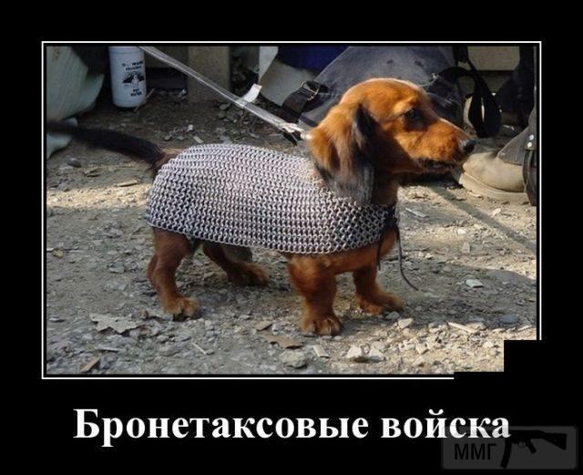 72175 - Смешные видео и фото с животными.