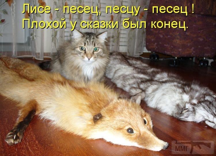 72224 - Смешные видео и фото с животными.