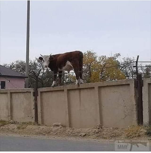 72415 - Смешные видео и фото с животными.