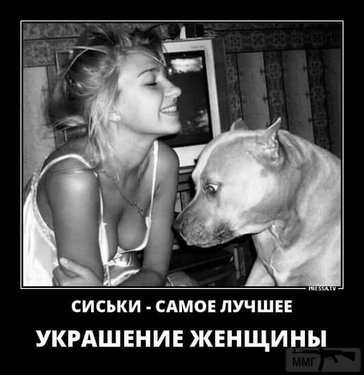 72796 - Смешные видео и фото с животными.