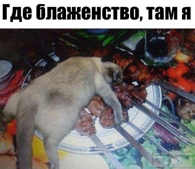 72992 - Смешные видео и фото с животными.