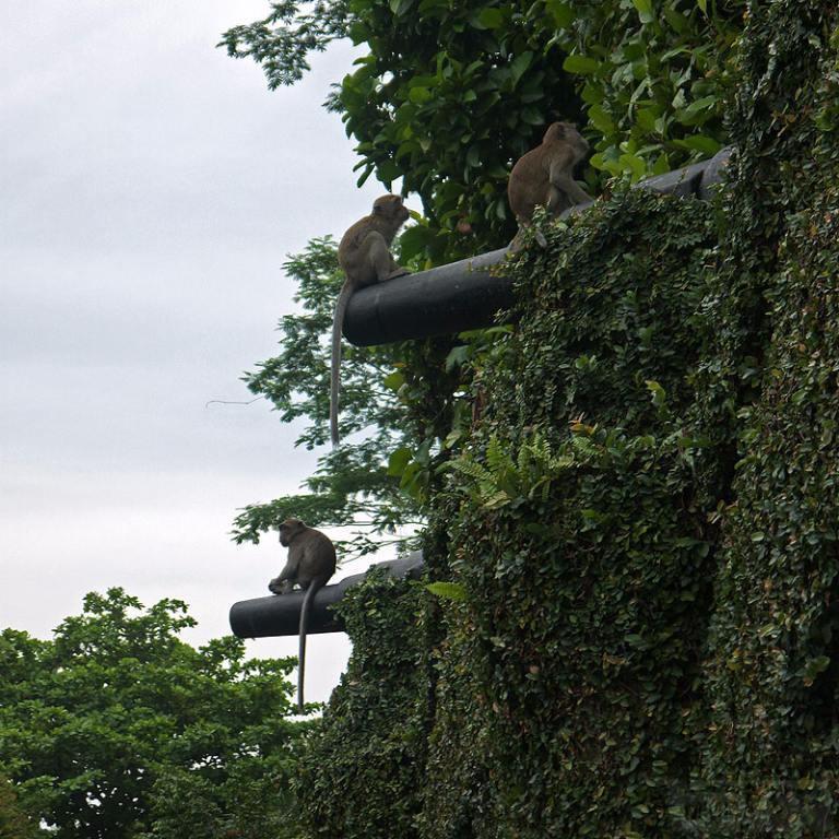 7365 - Корабельные пушки-монстры в музеях и во дворах...