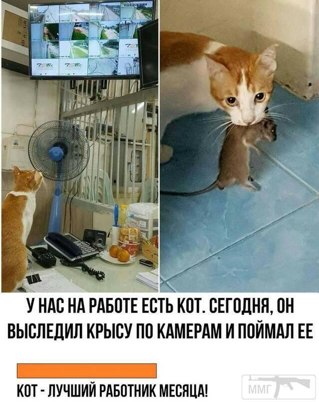 75336 - Смешные видео и фото с животными.