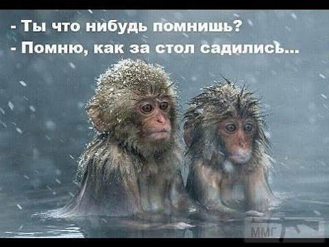 76589 - Пить или не пить? - пятничная алкогольная тема )))