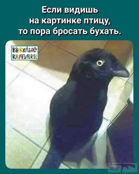 77681 - Пить или не пить? - пятничная алкогольная тема )))