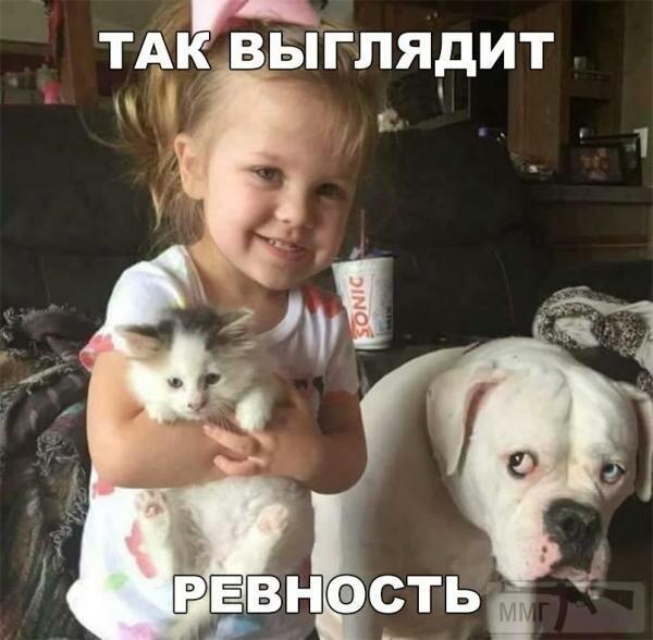 80334 - Смешные видео и фото с животными.