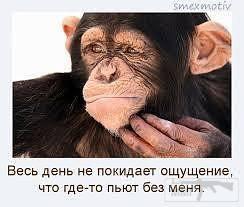 82194 - Пить или не пить? - пятничная алкогольная тема )))