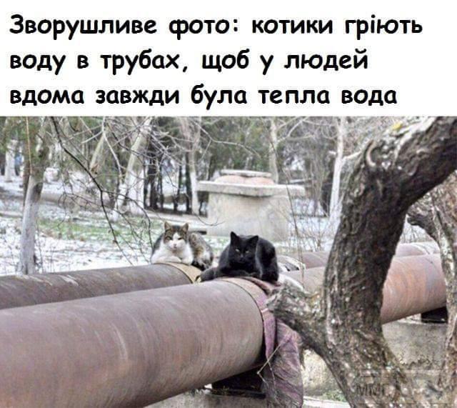 82947 - Смешные видео и фото с животными.